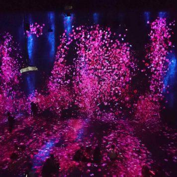 teamLab - Eclosion de fleurs - Salle G